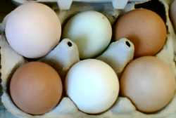 eggs - brown, white, magnolia, green-blue